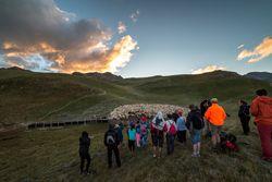 Festival de l'Alpage - Le Champsaur & Valgaudemar