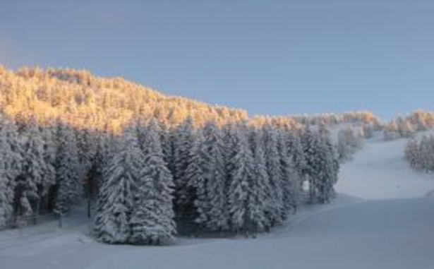 Le Barioz Alpin - Forêt