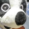 Le Pandathlon, la course d'orientation grandeur Nature de retour