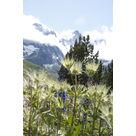 activité de montage Parc à thèmes : Visite du Jardin alpin du lautaret