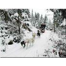 Conduite de chiens de traîneaux avec Husky Safari - Husky Safari