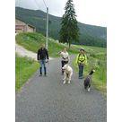 Chiens de traîneaux, cani-rando/cani-cross avec Qimmiq