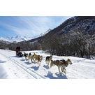 Balade en traineau à chiens d'une demi-heure - Maison du Tourisme