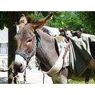 Balades avec les ânes de Jean-Luc en autonomie - Office de Tourisme de Mieussy