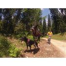 Alpen Team école de traîneaux à chiens - activités hors-neige