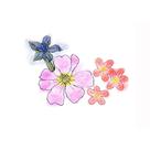 Atelier explor'acteur nature : Les fleurs en couleurs