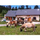 Animation poneys à Gève