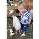 activité de montage Zoo - parc animalier : Mini ferme pédagogique