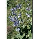 À la découverte des plantes de montagne avec le Parc de la Vanoise