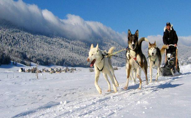 Entre chiens et loups HD