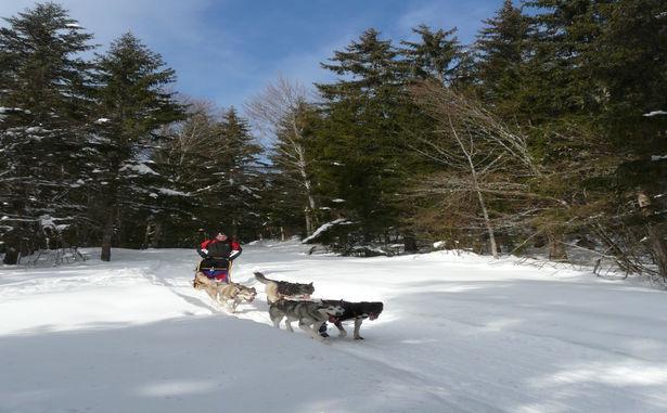 STATANMSM01380036 - chiens-traineaux-correncon