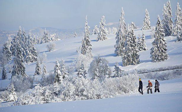 STATANMSM2V500956 - champ du feu neige 029