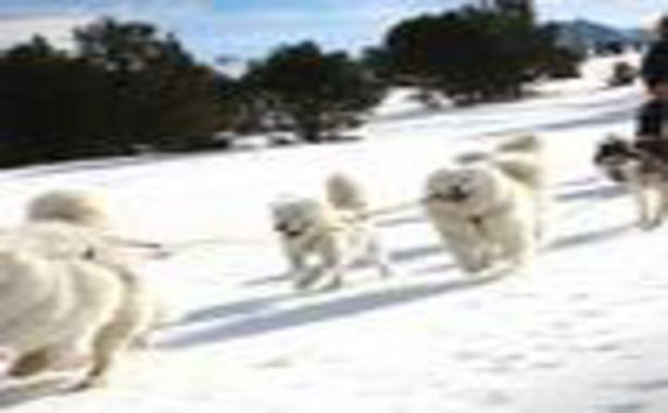 Le Cambre d'Aze - Traineaux à chiens
